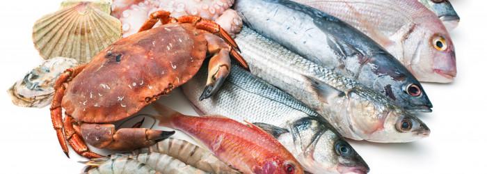 Fische & Krustentiere